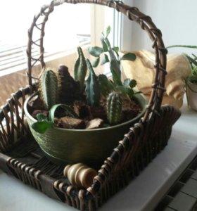 Карзина с кактусами