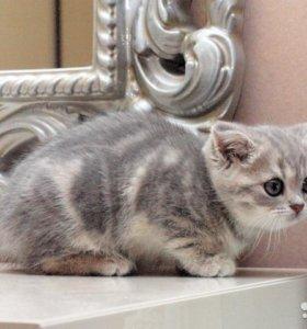 Кошечка плюшевая мраморная шубка. Красотка)