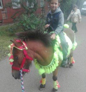 Катание на лошадях)