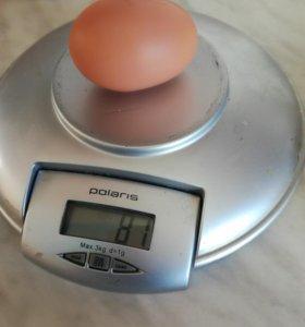 Продам яйцо домашнее куриное
