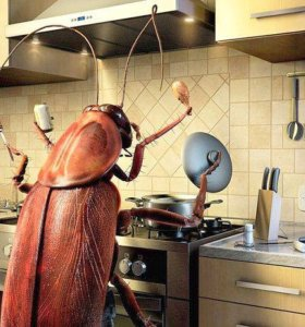 Профилактика и Уничтожение насекомых.