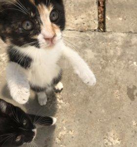 Супер Котята, Кошки, Коты, Породистые