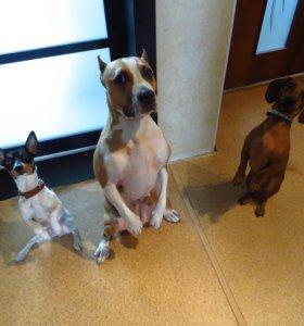 Гостиница для собак. Квартирная передержка