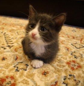Четыре харизматичных кото-мальчика