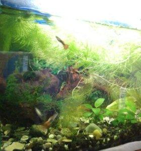 Аквариум 27л с рыбками, растениями и инвентарем