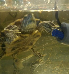 Аквариум для черепах,20л  фильтр,водонагреватель