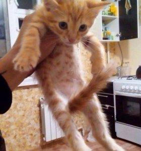 Котята. В ДОБРЫЕ РУКИ!