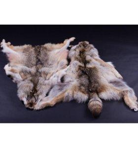 Шкура полярного волка