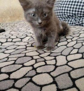 Отдам котенка мальчик