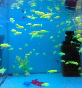 Флоурисцентные рыбки