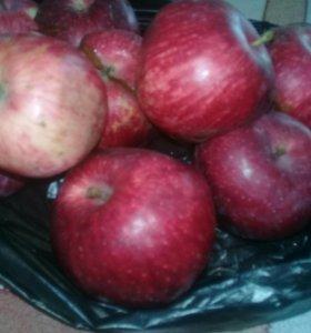 Продаю яблоки. Не дорого. Вообще не дорого .
