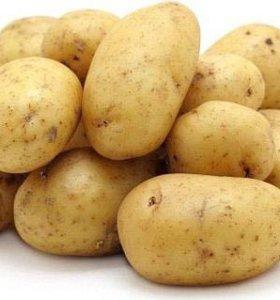 Картофель оптом дешевле