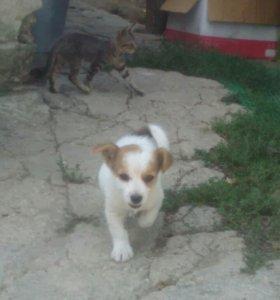 Собака дворняга