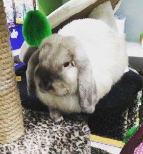 Вязка декоративный кролик