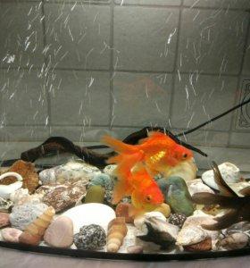 2 аквариума со всем необходимым