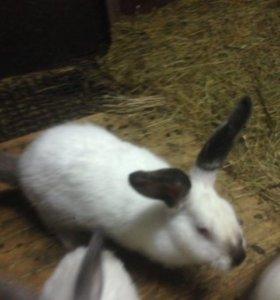 Продаю кроликов и крольчат