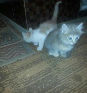 Котята мальчики!