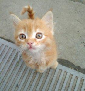 Котёнок - Новошахтинск, Ростовская область.