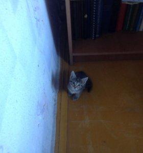 Чудный котёнок