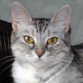 Кошечка-красавица Бонечка в дар