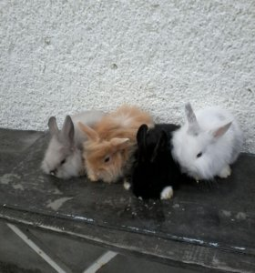 кролики, свинки