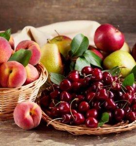 Саженцы плодовых и декоративных деревьев