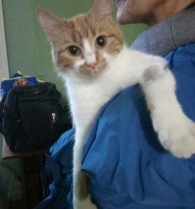 Кошечка, возраст ок. 1 года, стерилизованная