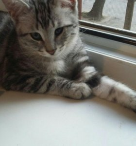 Кот, котята
