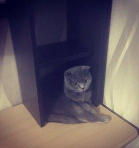 Кошка вязка