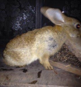Продам крольчаток