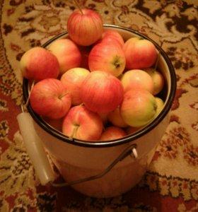 Яблоки садовые