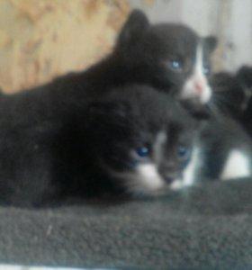 Трехнедельные котята
