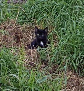 Кошечка ищет дом!!!!