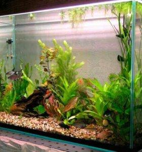 Замена швов в аквариуме