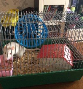 Мышь белая декоративная