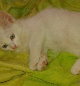 Белая кошечка с рыжими ушками и хвостиком