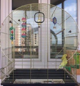 3 волнистых попугая+Большая клетка. Срочно!!!