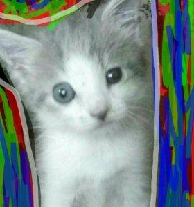 Котенок, мальчик Дымок