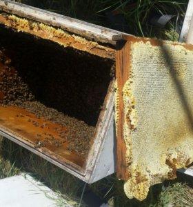 Мед натуральный,хорошего качества!