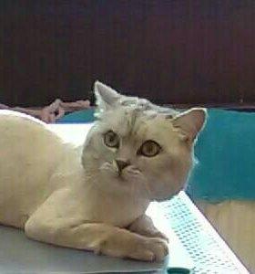 Стрижка кошек, купание,вычесывание
