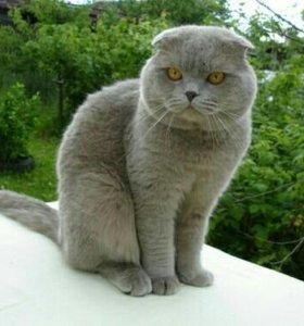 Кот вязка для любой кошечки