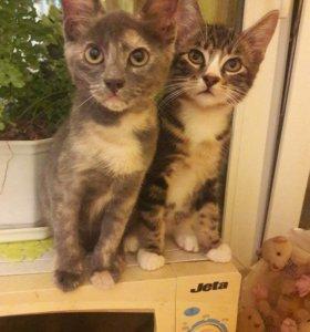 Милые котятки 🐱