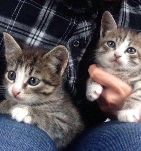 Котятки мииииилые