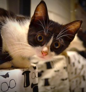 Сказочный котик