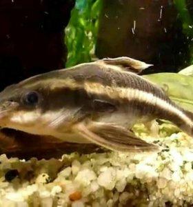Рыбки, черепаха
