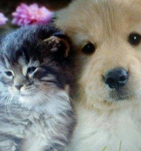Бесплатно щенки от маленькой собачки, рыжие