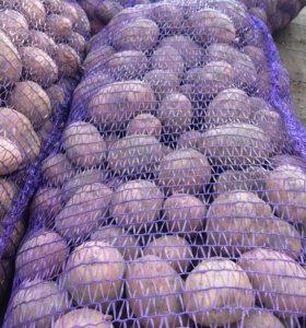 Картофель с доставкой до ворот