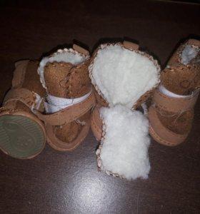 Ботинки для маленькой собачки