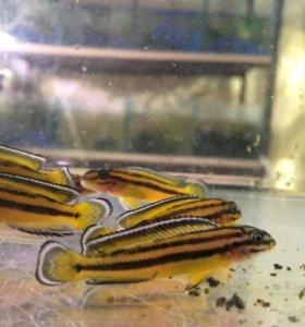 Аквариумные рыбки своего разведения