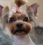 Стрижка для вашей собачки